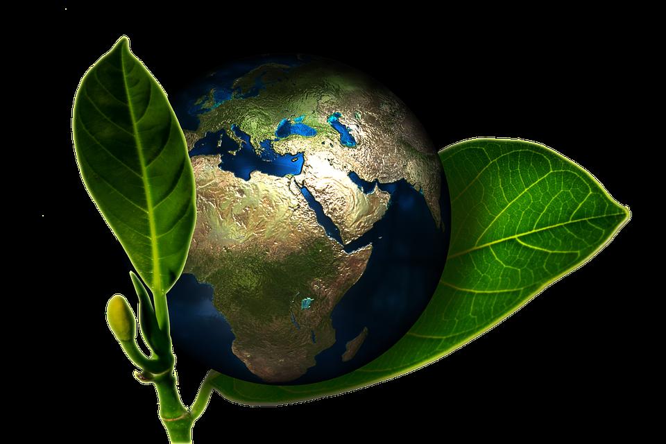 Les écologistes : Les intérrogations qu'on peut avoir à leur sujet